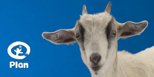Plan Canada goat
